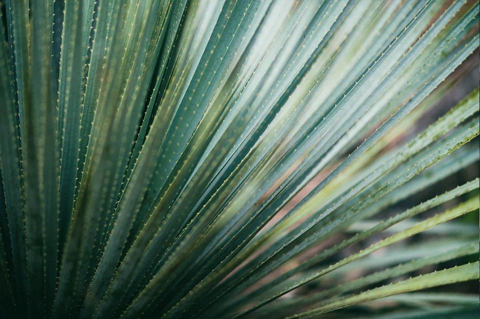 Green Fern Photo Plant